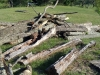 The pile of logs left in my yard