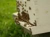 Hive02